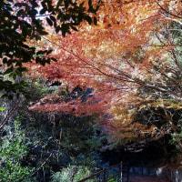 12/06探鳥記録写真(瀬板の森の小鳥たち:ジョウビタキ、ルリビタキ他)