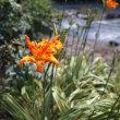 7月 庭の花