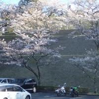 ふじの咲く丘