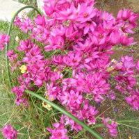 花編(2)花・花で癒される毎日