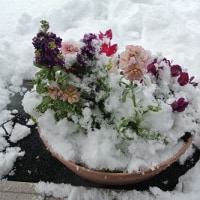 雪、積もりましたね~