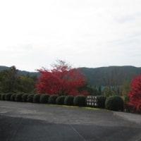 紅葉を楽しみながら