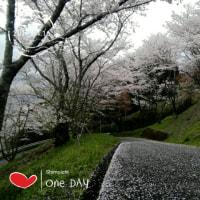 春霞み桜吹雪の午後でした‼