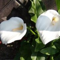 「おはようの花」 カラー 5月
