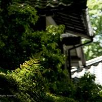 新緑の季節 -2-