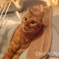 障害を持つ猫と暮らす
