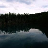 青い池にむかっています  直線道路 気持ちがいいですよ