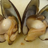 みんな元気か~い♪宮城「銀鮭」の刺身デビュー!新鮮お刺身を食べて、元気だしていきましょう!!発寒かねしげ鮮魚店の魚屋しげ。