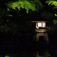 旧古河庭園のライトアップ