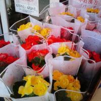 花キャンペーン