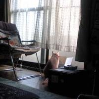 ■猫立商店NORA■