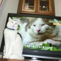 イタリア ボス猫とマリン