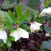 「季」を忘れない花たち
