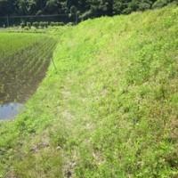 米作りの記録8