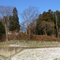下根子桜のアスパラガス(12/8)