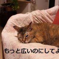夏向けの猫ベッド