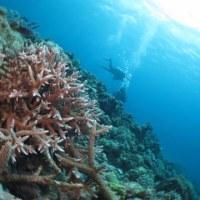 サンゴがきれい・・・