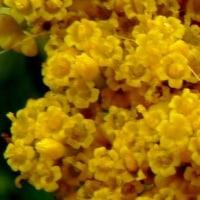 初見の花。