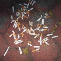 タバコのポイ捨てオンパレード170522