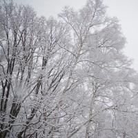 一気に冬へ! A winter scene