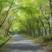 新緑につつまれて It's a green world !