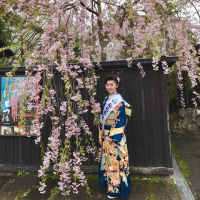 角館町・桜まつり
