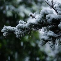 11月の雪は、54年ぶり。