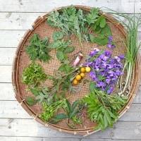 1816   雑草のそれぞれに花庭の春   詩子