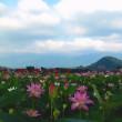 夏の花といえば蓮 開花がそろそろ