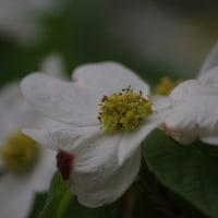 デイキャンプ場(BBQ利用)と新たに開花した花