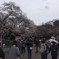 桜が咲く上野公園にある東京都美術館で、ティツィアーノを観る。