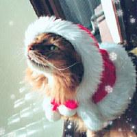クリスマスコス*