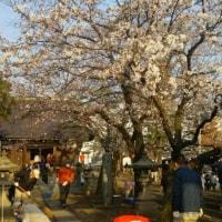 長野マラソン応援お守りシールの石渡神社は桜が満開です。
