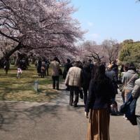 小石川植物園の花見に行きました。