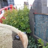 高知銘菓「かんざし」と、はりまやばし~クリン家ドライブ四国旅行・33