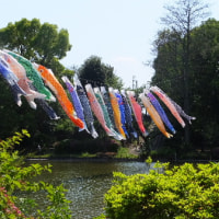 鯉のぼり・善福寺公園