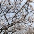 桜のようで、きれいです❗️