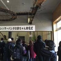 パブリックビューイング @ 円山動物園