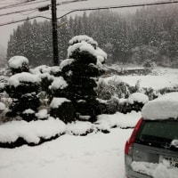 郡上の冬はこうでなくちゃ!