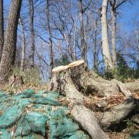 この木一本切ることが林の生態系にとってどれだけのダメージか…