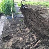 トマトの畝を作りました (^^)/