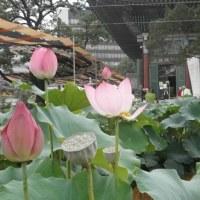【曹渓寺の思い出いろいろ…】伝統寺院巡礼ファムツアー⑦2017/4/19