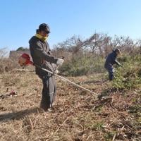 ●1/22 大久保農園報告 雑草刈りと耕耘