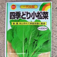 小松菜のタネ蒔き