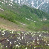 鑓温泉三白平の花