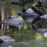 桐生川の新緑