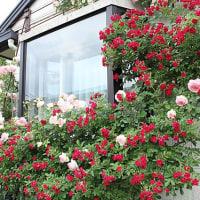 水谷薔薇ガーデン、Ⅴ