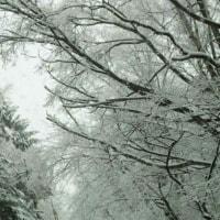 春の雪の日に。。。