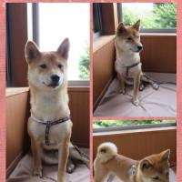 2016年8月そぼろ旅(1日目・後編)