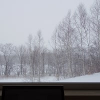 今日の、窓際。